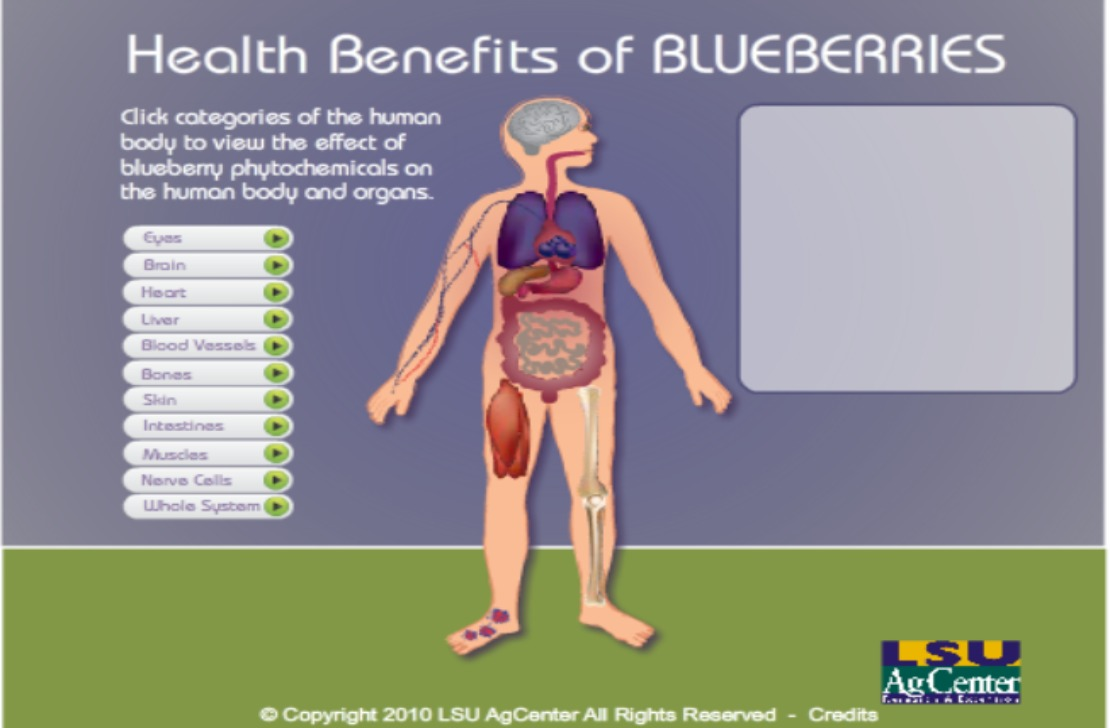 Image:BlueberryBodyImage FeatureSize.jpg