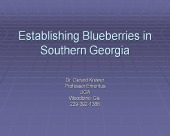 Image for Establishing Blueberries in Southern Georgia powerpoint presentation.